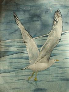 Start (c) ein Möwen Aquarell von FRank Koebsch