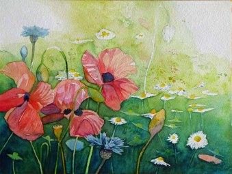 sommerliche Farbtupfer (c) ein Mohnaquarell von Frank Koebsch