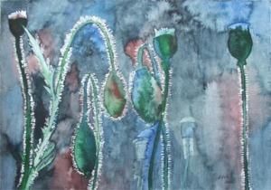 verblühter Mohn (c) Aquarell von Frank Koebsch