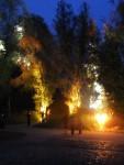 Iluminierte Bäume