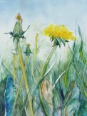 Sommerwiese (c) ein Löwenzahn Aquarell von Frank Koebsch