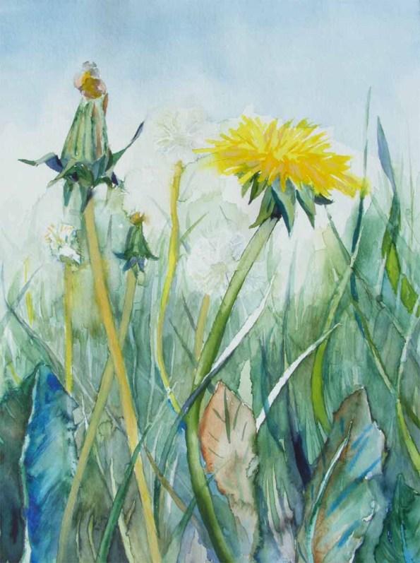Sommerwiese (c) ein Löenzahnaquarell von Frank Koebsch