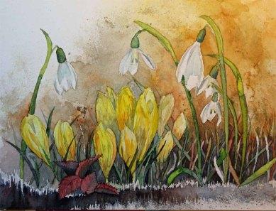 Frühlingsboten (c) ein Aquarell mit Krokussen und Schneeglöckchen von Frank Koebsch