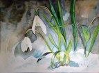 Schneeglöckchen (c) Aquarell von Frank Koebsch