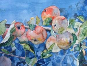 zum reinbeißen - Ein Apfelbild in Aquarell von Frank Koebsch ©