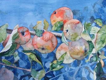 zum reinbeißen (c) Ein Apfelbild in Aquarell von Frank Koebsch