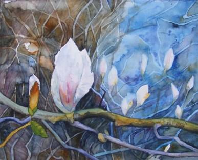 Die ersten Blüten der Magnolie (c) Aquarell von Frank Koebsch