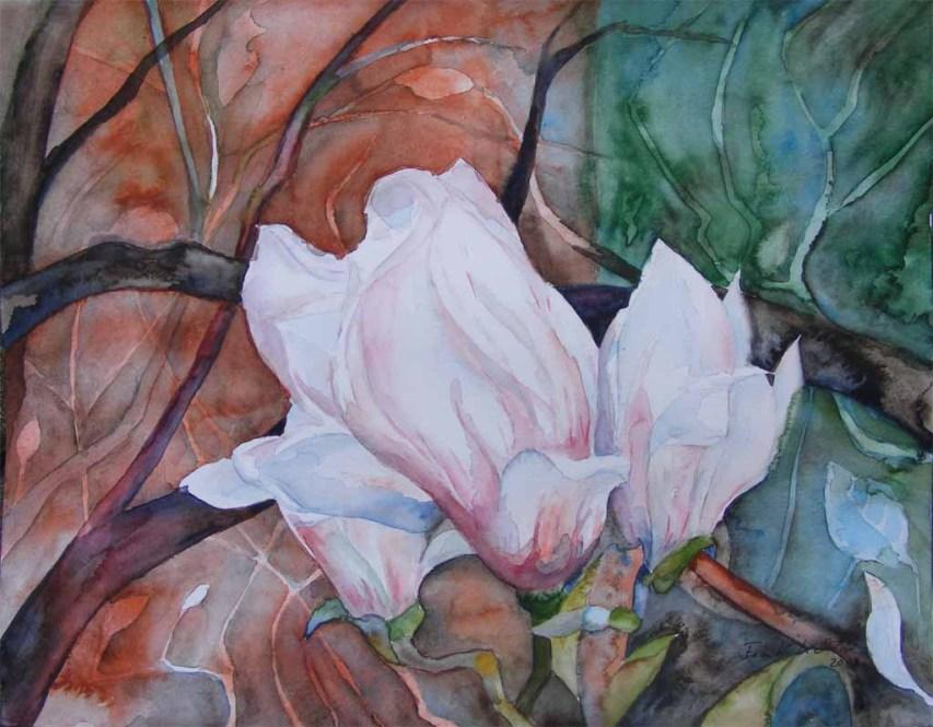 Magnolien Blüten (c) Aquarell von Frank Koebsch