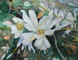 Magnolien (c) Aquarell von Frank Koebsch