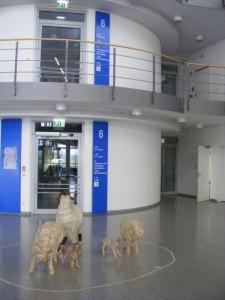 Schafe von Natascha Brändli 1