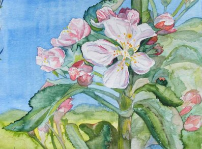 Apfelblüten - ein Frühlingsbild in Aquarell von Frank Koebsch ©