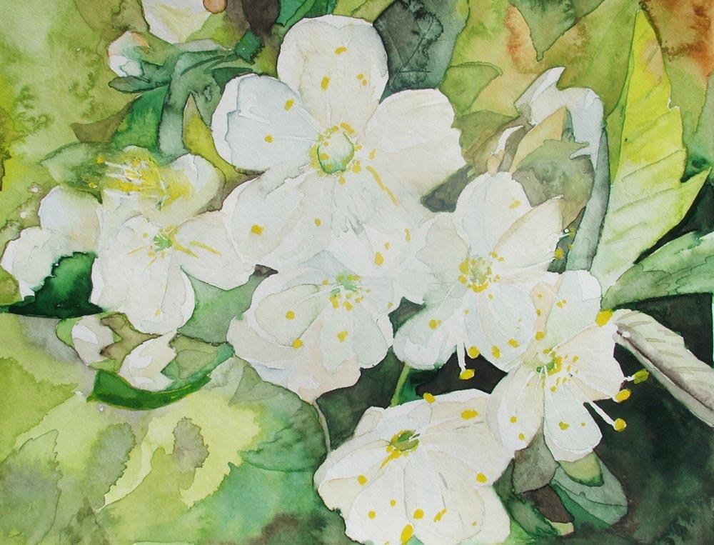 Frühling - ein Aquarell mit Kirschblüten von Frank Koebsch