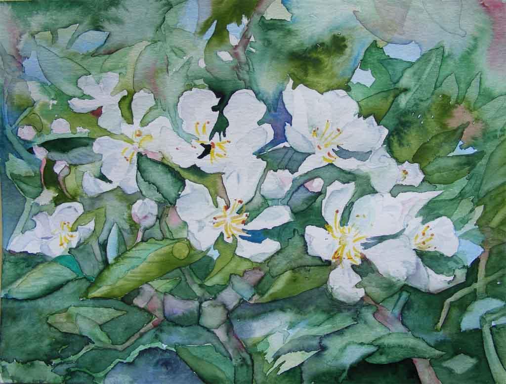 Frühlingsgruß - ein Aquarell mit Kirschblüten von Frank Koebsch ©