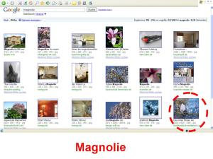 Positionierung des Bildes - Magnolie