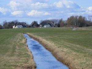 Fischland - Ahrenshoop - Althagen im Frühling 11
