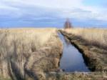 Fischland - Ahrenshoop - Althagen im Frühling 15