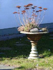 Fischland - Ahrenshoop - Althagen im Frühling 3