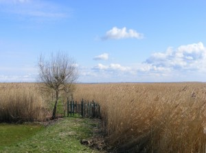 Fischland - Ahrenshoop - Althagen im Frühling 4