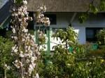 schmucke Häuser im Frühling - Fischland Darß (8)