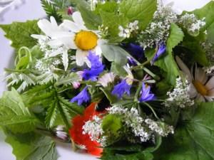 Spries- und Sproßsalat mit Veilchen