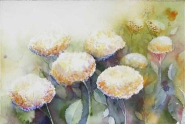 Verzauberte Blüten - Hortensien (c) Aquarell von Frank Koebsch