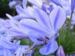 Blüten im Herbst 1 (c) Frank Koebsch