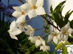 Blüten im Herbst 2 (c) Frank Koebsch