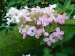 Blüten im Herbst 4 (c) Frank Koebsch