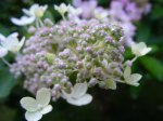 Blüten im Herbst 5 (c) Frank Koebsch