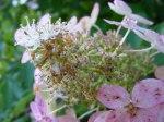 Blüten im Herbst 6 (c) Frank Koebsch