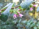 Blüten im Herbst 7 (c) Frank Koebsch