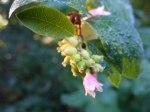 Blüten im Herbst 8 (c) Frank Koebsch