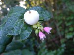 Blüten im Herbst 9 (c) Frank Koebsch
