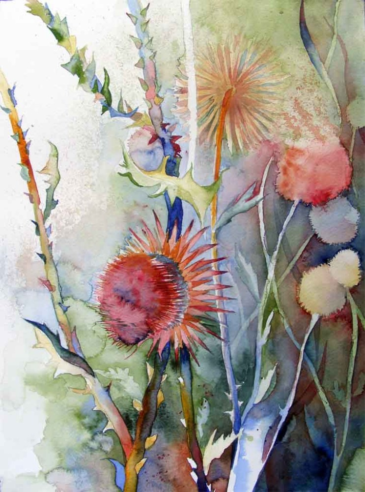 Distel Aquarelle (2/6)