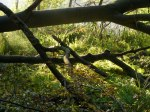 Herbst im Schlaubetal (c) Frank Koebsch (12)