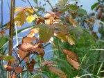 Herbst im Schlaubetal (c) Frank Koebsch (9)