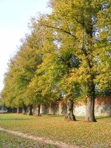 Fotosession beim Klarissen Kloster Ribnitz (c) Frank Koebsch (3)