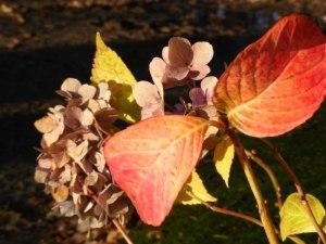 Rote Blätter im Herbst (C) Frank Koebsch (12)