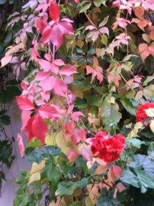 Rote Blätter im Herbst (C) Frank Koebsch (3)