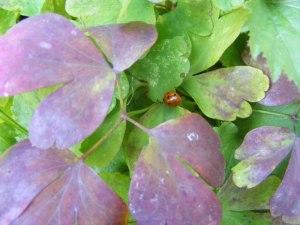 Rote Blätter im Herbst (C) Frank Koebsch (7)