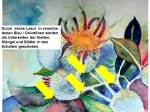 Hinweise zu einem Distel Aquarell (3)