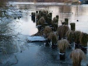 Winter an der Warnow (6) Frank Koebsch (c)