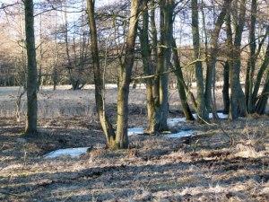 Kösterbeck in der ersten Frühlingssonne (3)