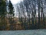 Kösterbeck in der ersten Frühlingssonne (5)