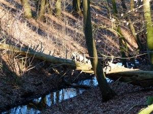 Kösterbeck in der ersten Frühlingssonne (6)