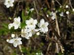 Obstblüte (c) FRank Koebsch (4)