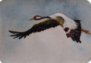 Kranich im Flug 2 (c) Miniatur in Aquarell von Frank Koebsch