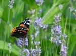 Schmetterlinge bringen weitere Farbtupfer (c) Frank Koebsch