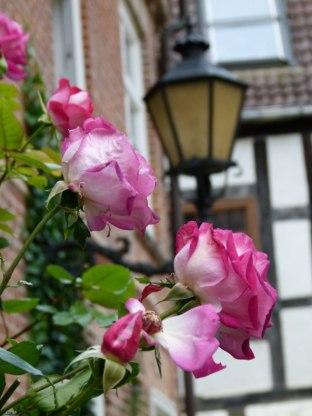 Rosen im Herbst (c) Frank Koebsch (9)