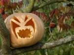 Halloweenschmuck in Sanitz (c) Frank Koebsch (3)
